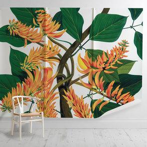 'Flame Tree [Erythrina Poeppigiana]'