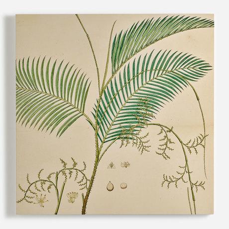 'Calamus Rotang, Rattan Palm'
