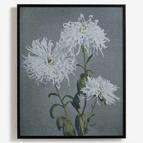 'Chrysanthemum'