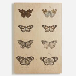 'Butterflies'