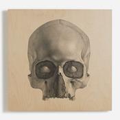'Engraving of a Human Skull'