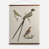 'Flycatcher, Anteater, Warbler'
