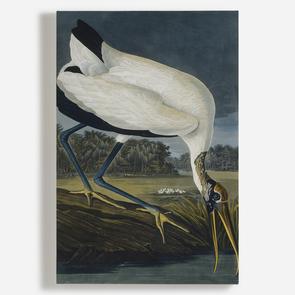'Wood Stork, Mycteria American'