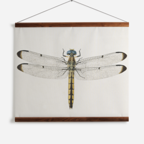 'Dragonfly 1'