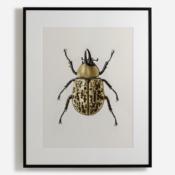 'Scarab Beetle'