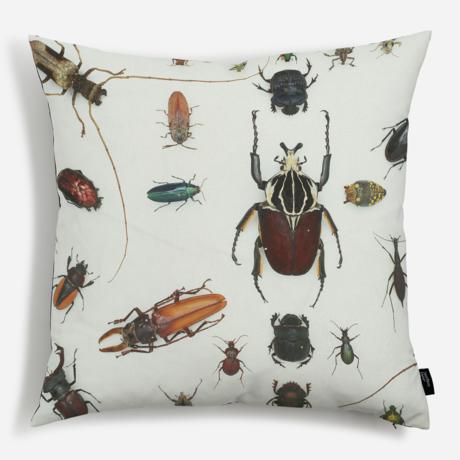 'Various Beetles'