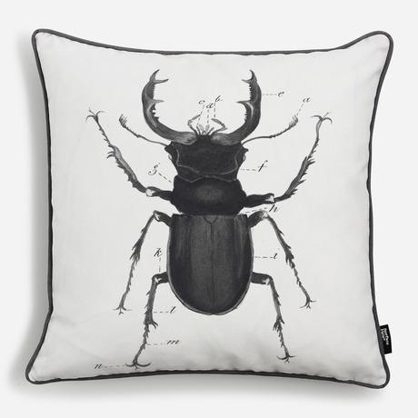 'Lucanus Cervus - Beetle'