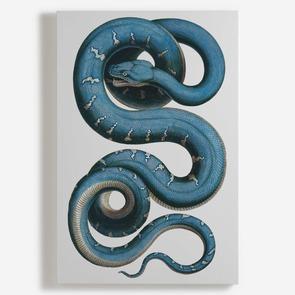 'Snake'