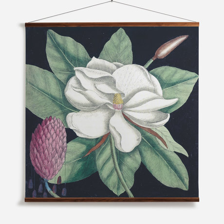 'Magnolia II'