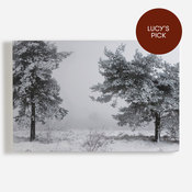 'Winter Trees'