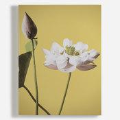 'Lotus'