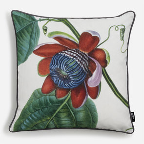 'Passiflora Alata'