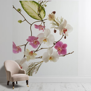 'Delicate Flowers'