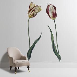 'Tulipa 'Admiral Bataen''