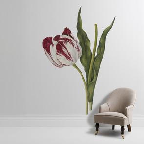 'Tulipa 'The Claude & the Duke of Sutherland'