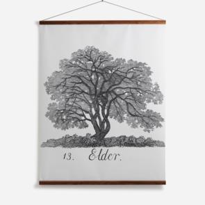 'Elder'