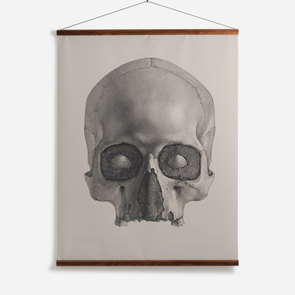 'Engraving of a Human Skull'