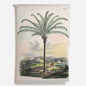 'Canopy Palm [Maximiliana regia]'