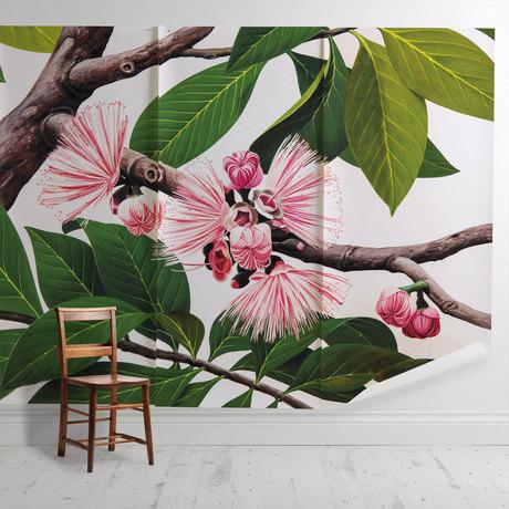 'Malay Apple [Eugenia malaccensis]'