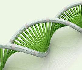 Hepatitis C DNA vaccine injector