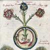 Telos Magic Ourobouros Flower Alchemy