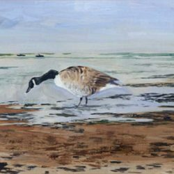 canada goose on the shore acrylic painting