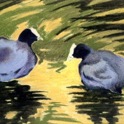 coot birds on water original painting