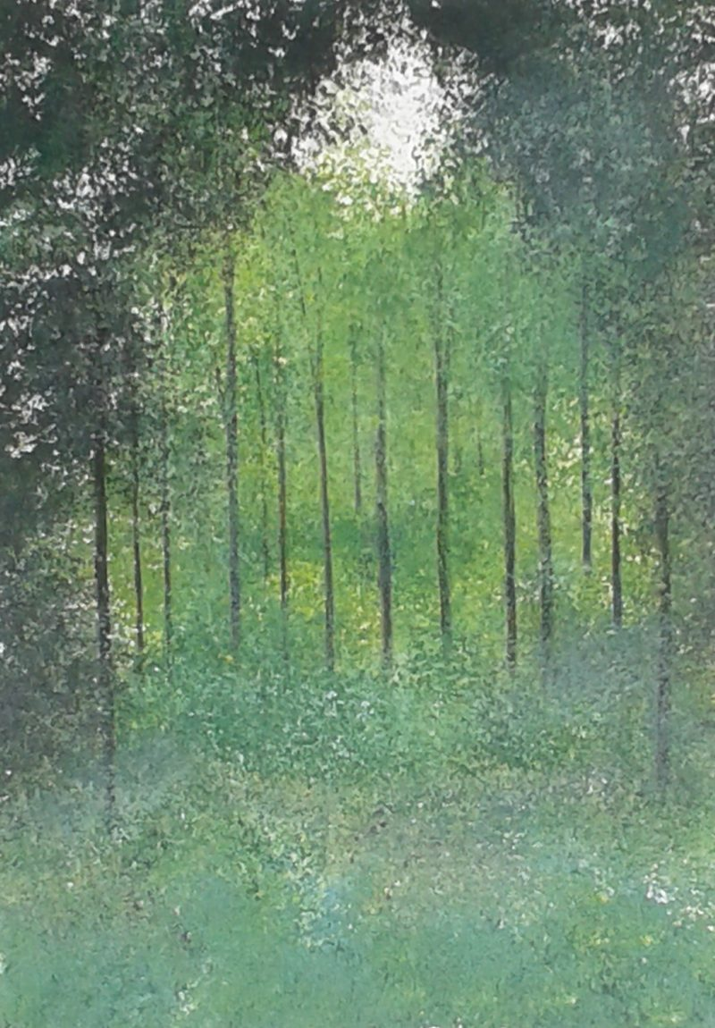 trees in hampshire National Trust waggoners wells. Jan Rippingham