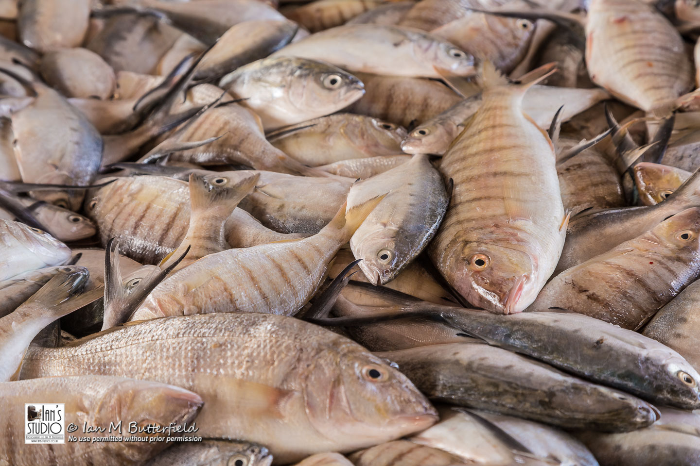 ACADEMY BITE: Lessons from the South America Cruise #10 – Fish for sale at the fish market