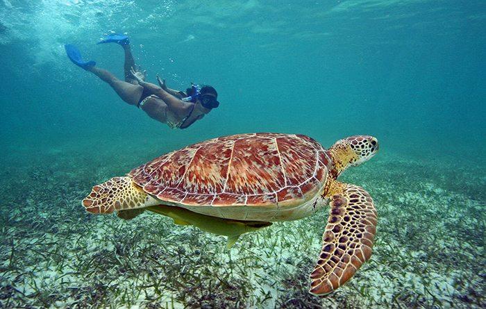 snorkeling-en-akumal