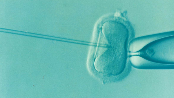 Three-parent IVF to be debated by MPs within weeks