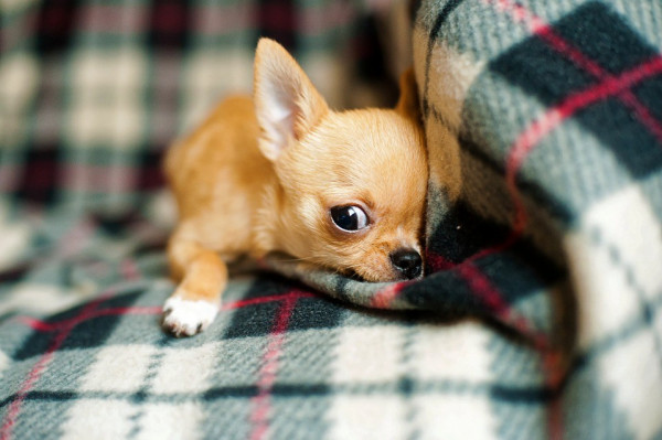 But who gets the pets? A look at the changing laws surrounding pet custody in divorce