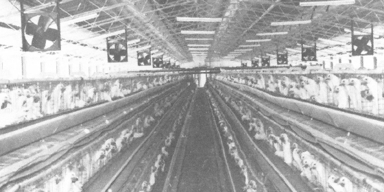 History Poultry Shed