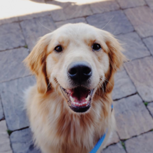 Kevin Systrom's dog, Dolly