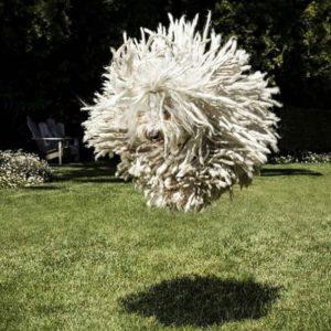 Mark Zuckerberg's dog Beast