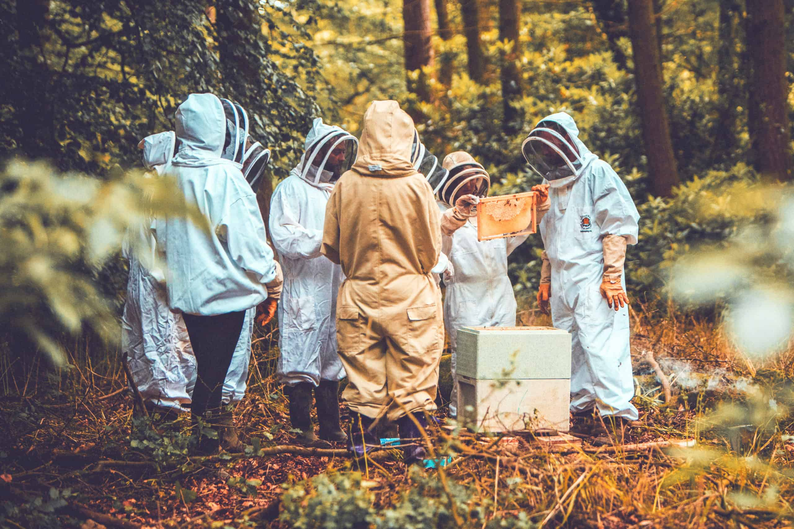 A group in a beekeeping session at Camp Wildfire. A summer weekend break in a forest near London and Kent. An outdoor woodland retreat featuring adventure activities, live music, DJs, parties and camping. Half summer adventure activity camp, half music festival, for adults only.