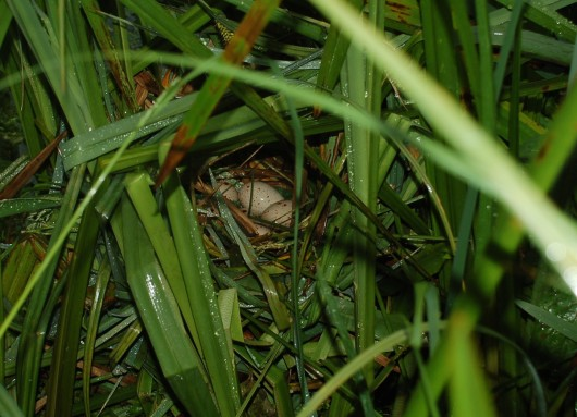 Moorhen eggs Chisenbury compton bridge 1200