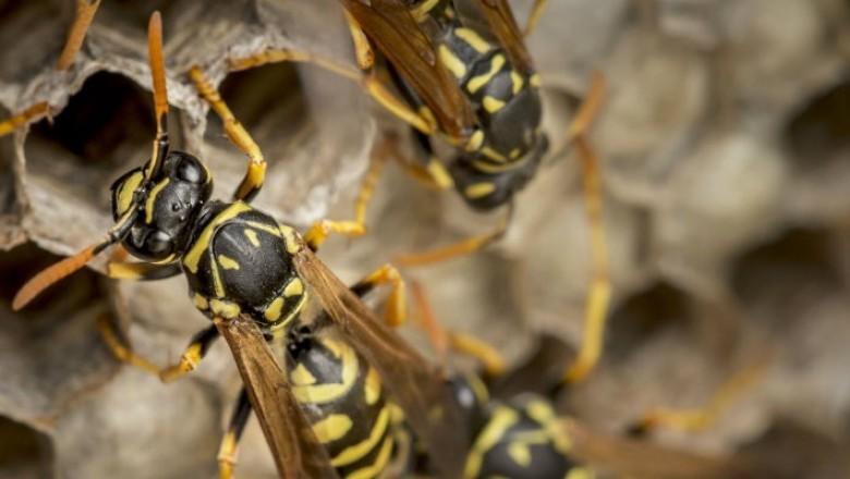 norfolk builder discovers giant wasps nest wisetradesmen