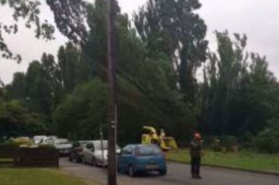 Facebook Video Leads to £24k Fine for Essex Tree Surgeons