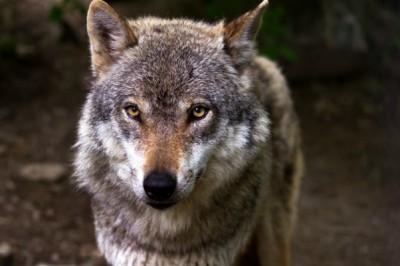 Teenager Left 'Shaken' by Wolf-Whistling Builders