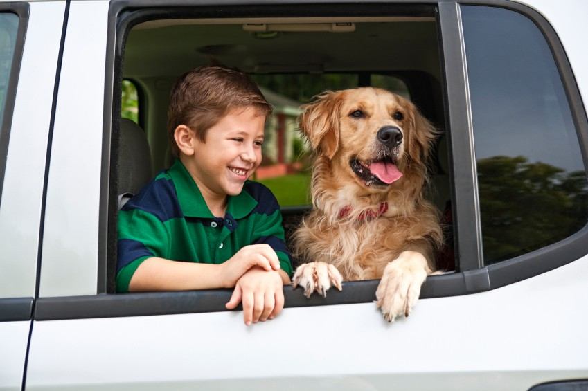 kids and pets distracted driving