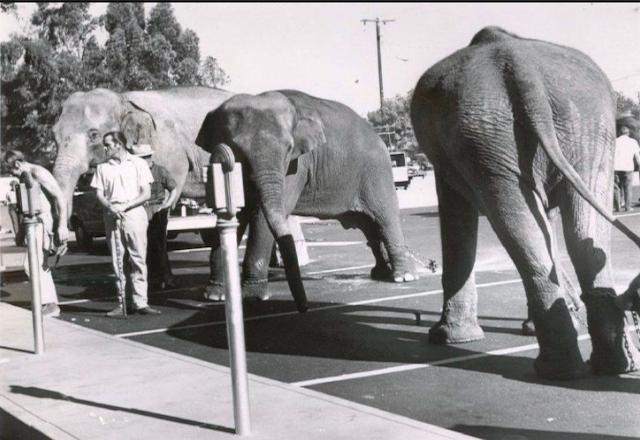 elephant parking