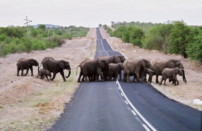 elephants road south africa