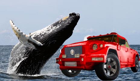 whale car